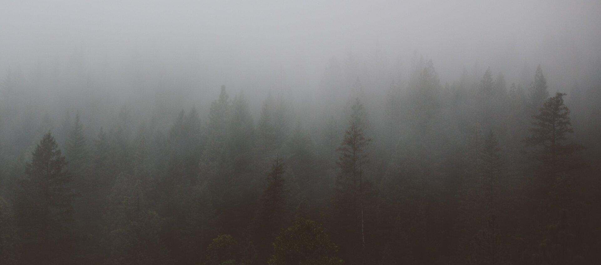 mgła zdjęcie Źródło: licencja: CC 0.