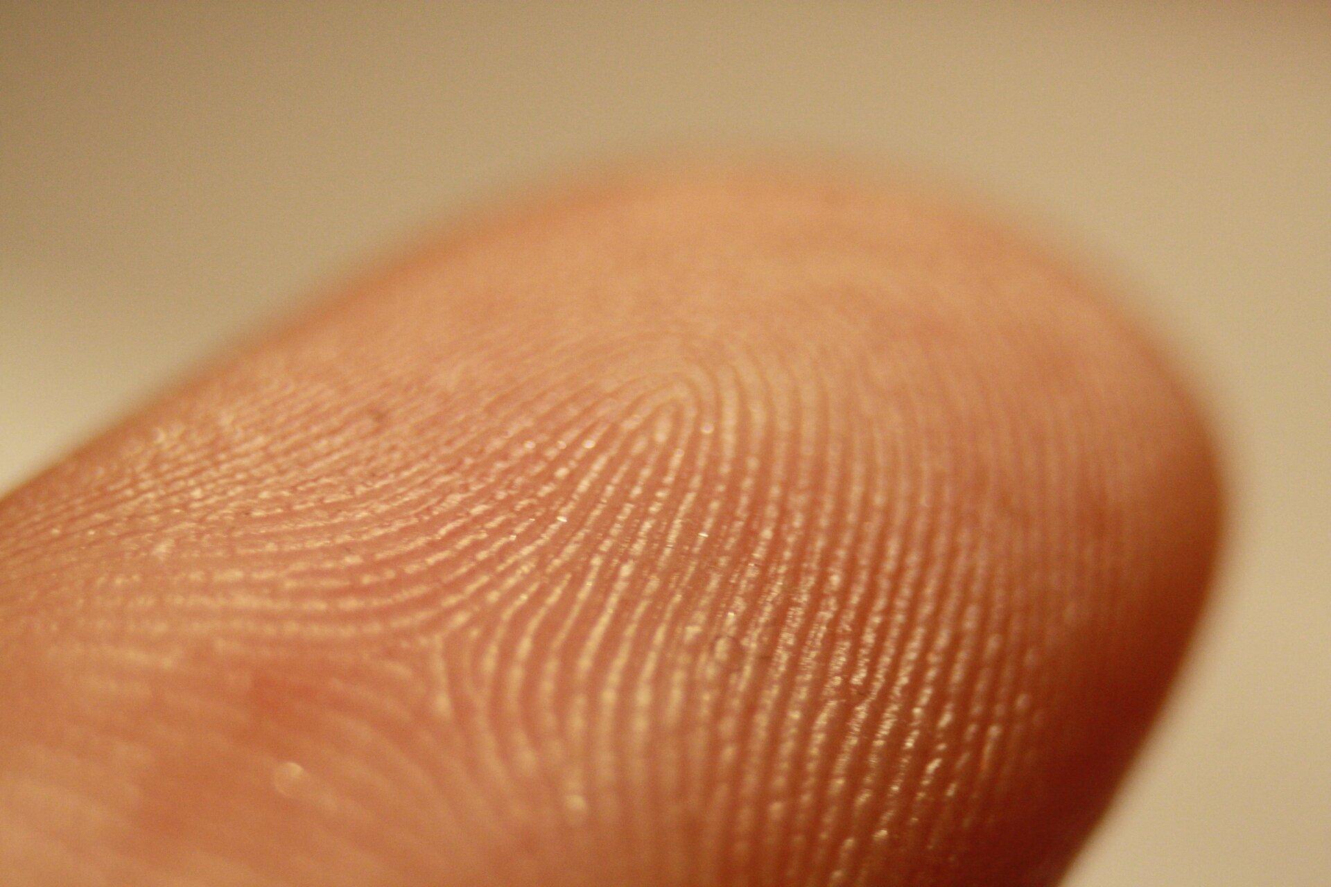 Zdjęcie przedstawia zbliżenie opuszka palca człowieka zwyraźnie widocznymi liniami papilarnymi