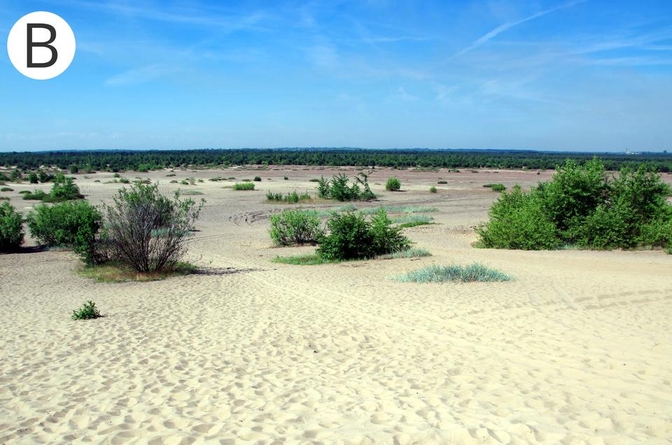 Pustynia Błędowska (nazywana Polską Saharą)