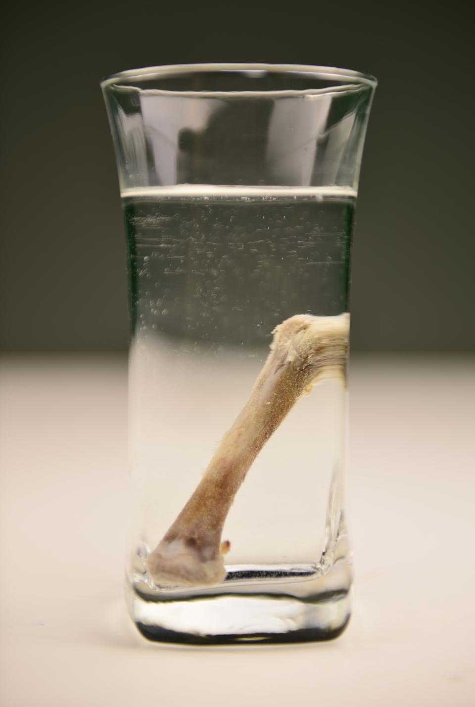 Zdjęcie 2: kość zanurzona woccie.