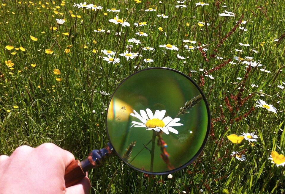 Fotografia przedstawia łąkę pełną trawy ikwiatów. Na pierwszym planie ujęto fragment dłoni trzymającej lupę. Dzięki lupie widzimy powiększony obraz kwiatka.