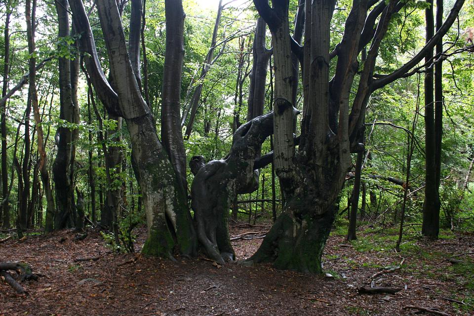 Fotografia prezentuje wygląd regla dolnego. Na fotografii widoczny liściasty las bukowy.