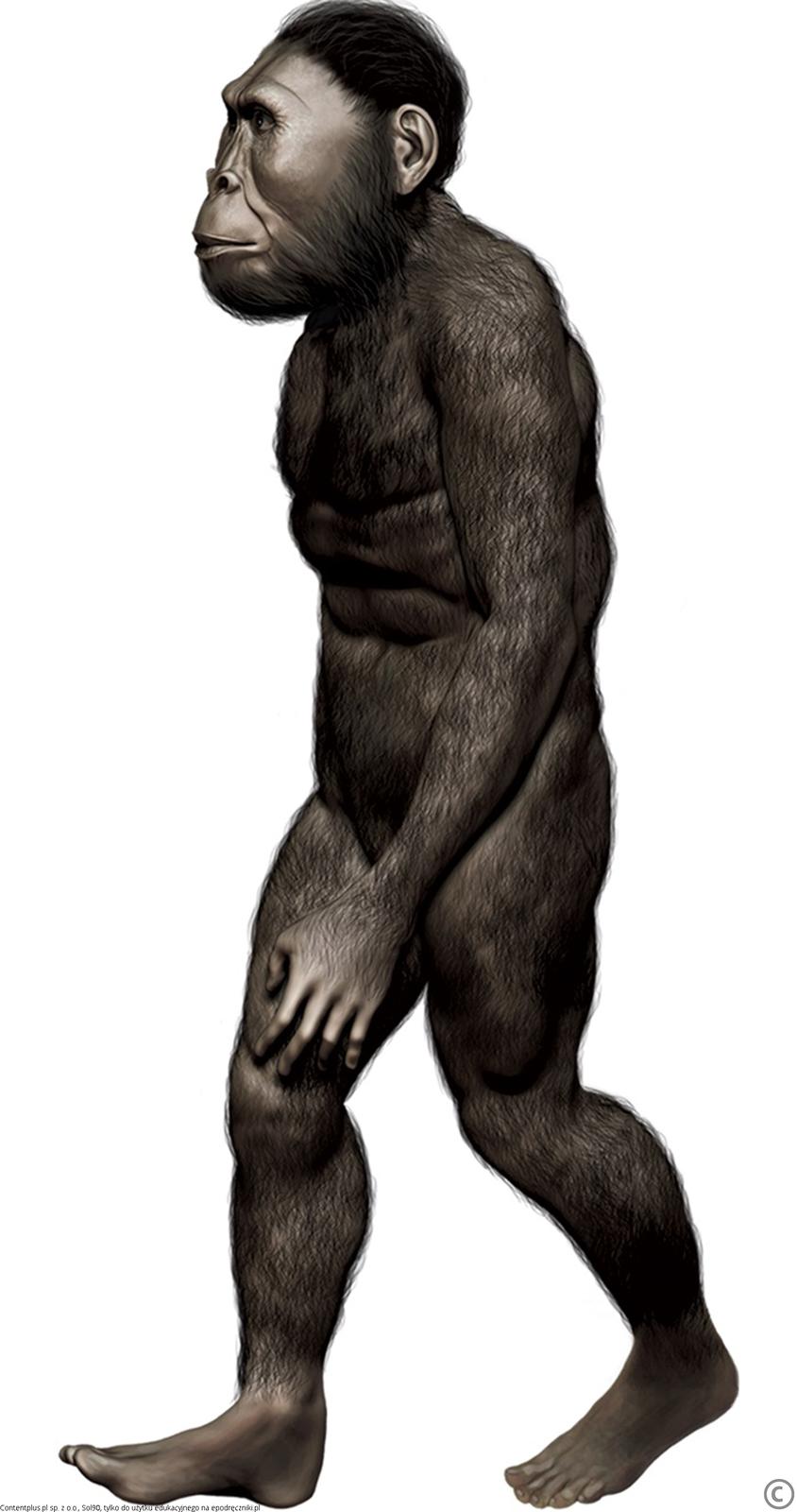 Postać wyprostowanej, dwunożnej, owłosionej istoty ogłowie itwarzy przypominające głowę itwarz małpy.