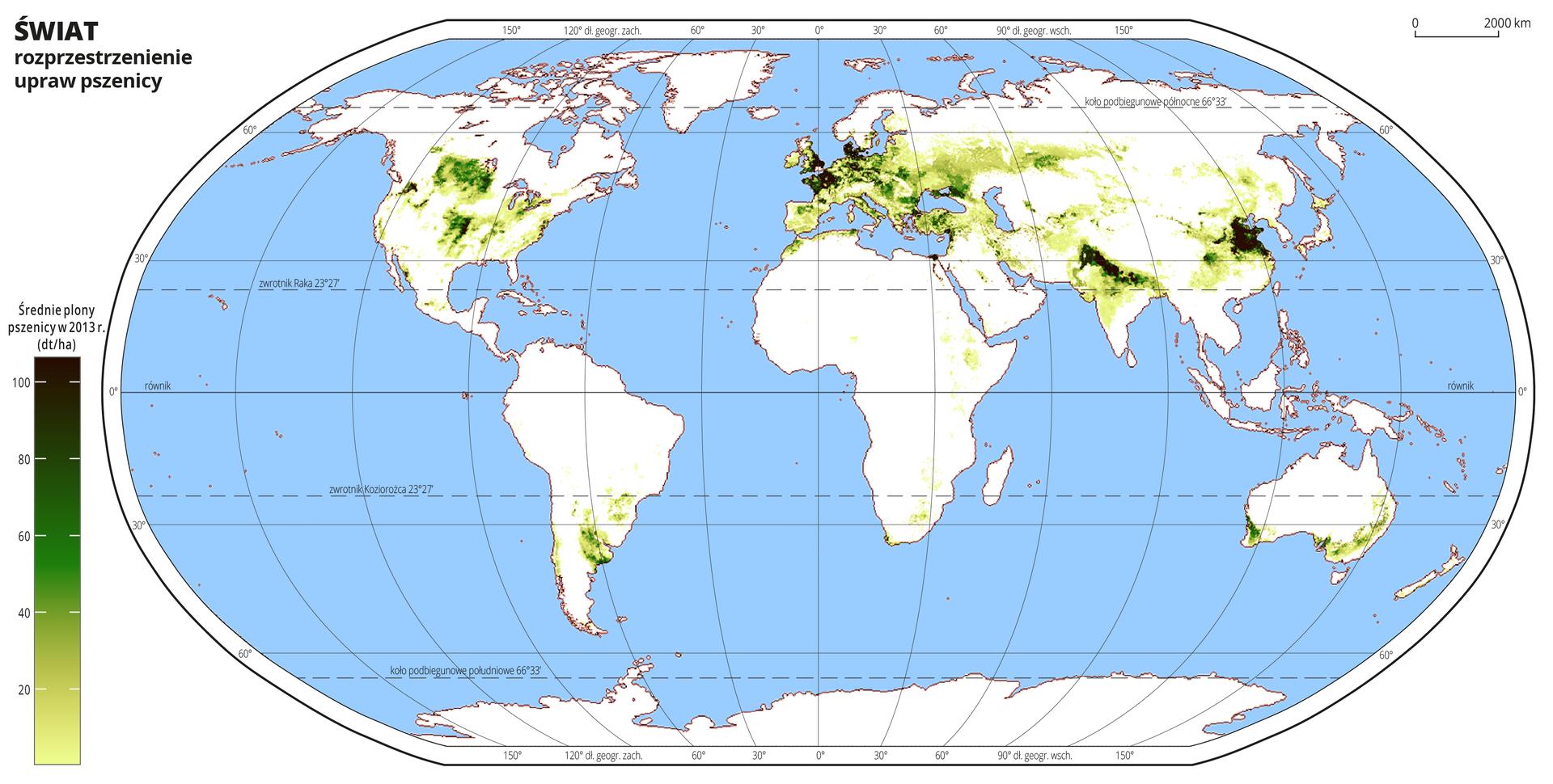 Ilustracja przedstawia mapę świata. Wody zaznaczono kolorem niebieskim.Na mapie odcieniami koloru zielonego zaznaczono średnie plony pszenicy wdecytonach zhektara wdwa tysiące trzynastym roku.Najjaśniejszym odcieniem koloru zielonego oznaczono obszary, na których średnie plony pszenicy wynoszą poniżej dwudziestu decyton zhektara, anajciemniejszym obszary, na których plony pszenicy przekraczają sto decyton zhektara. Uprawy pszenicy występują gównie na półkuli północnej irozmieszczone są wśrodkowej części Ameryki Północnej, całej Europie, środkowej część Azji, północnych Indiach iChinach. Nieliczne uprawy pszenicy wAmeryce Południowej występują wUrugwaju, awAustralii na południu kontynentu.Mapa pokryta jest równoleżnikami ipołudnikami. Dookoła mapy wbiałej ramce opisano współrzędne geograficzne co dwadzieścia stopni.Na dole mapy po lewej stronie umieszczono pionowy pasek podzielony na sześć części. Odcieniami koloru zielonego oznaczono średnie plony pszenicy wdecytonach zhektara wdwa tysiące trzynastym roku od dwudziestu do stu decyton zhektara co dwadzieścia decyton zhektara.