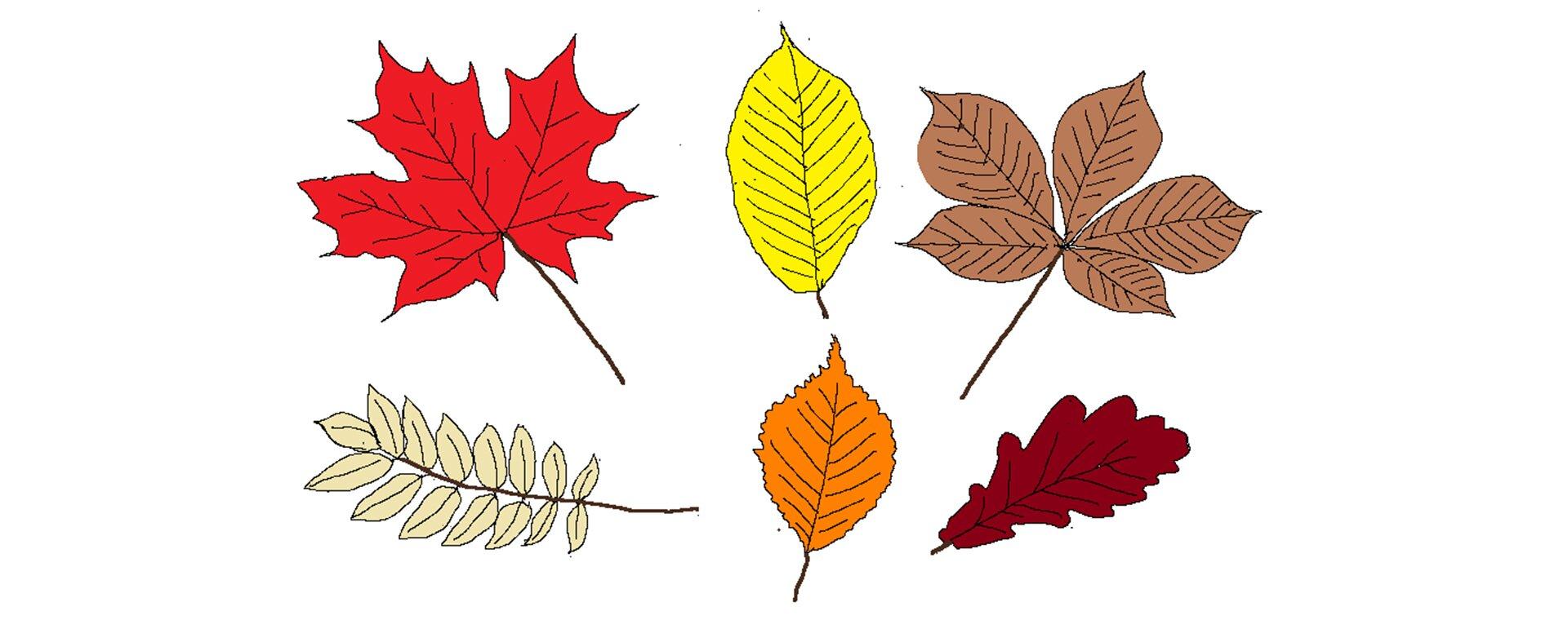 Ilustracja przedstawiająca liście wypełnione kolorem