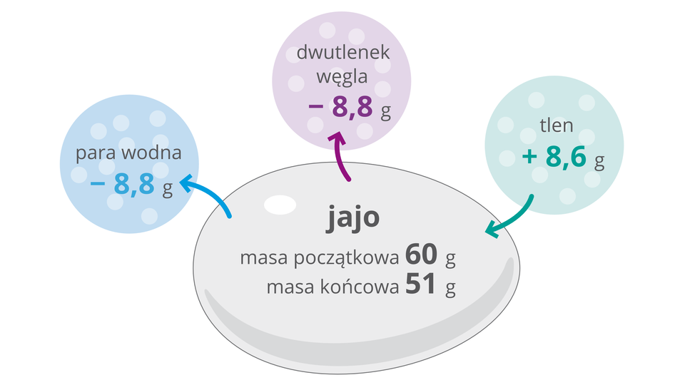Ilustracja wpostaci szarego owalu - jaja ikolorowych kół przedstawia zmiany wilość różnych substancji po dwudziestu jeden dniach rozwoju zarodka. Niebieskie koło symbolizuje parę wodną, której ilość zmalała o8 iosiem dziesiątych grama. Liliowe koło to dwutlenek węgla, którego ilość zmalała tak samo jak wody. Błękitne koło przedstawia tlen, którego ilość wzrosła wjaju o8 isześć dziesiątych grama. Wszarym jaju masa początkowa to 60 gramów, amasa końcowa to 51 gramów.