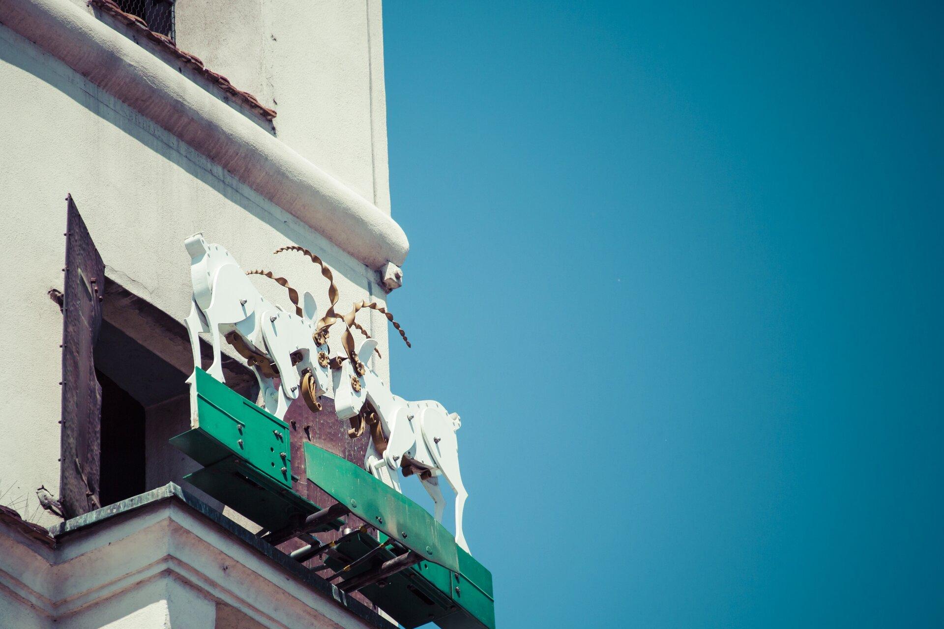 Ilustracja przedstawia poznańskie koziołki, znajdujące się na poznańskim ratuszu. Koziołki stykają się rogami.