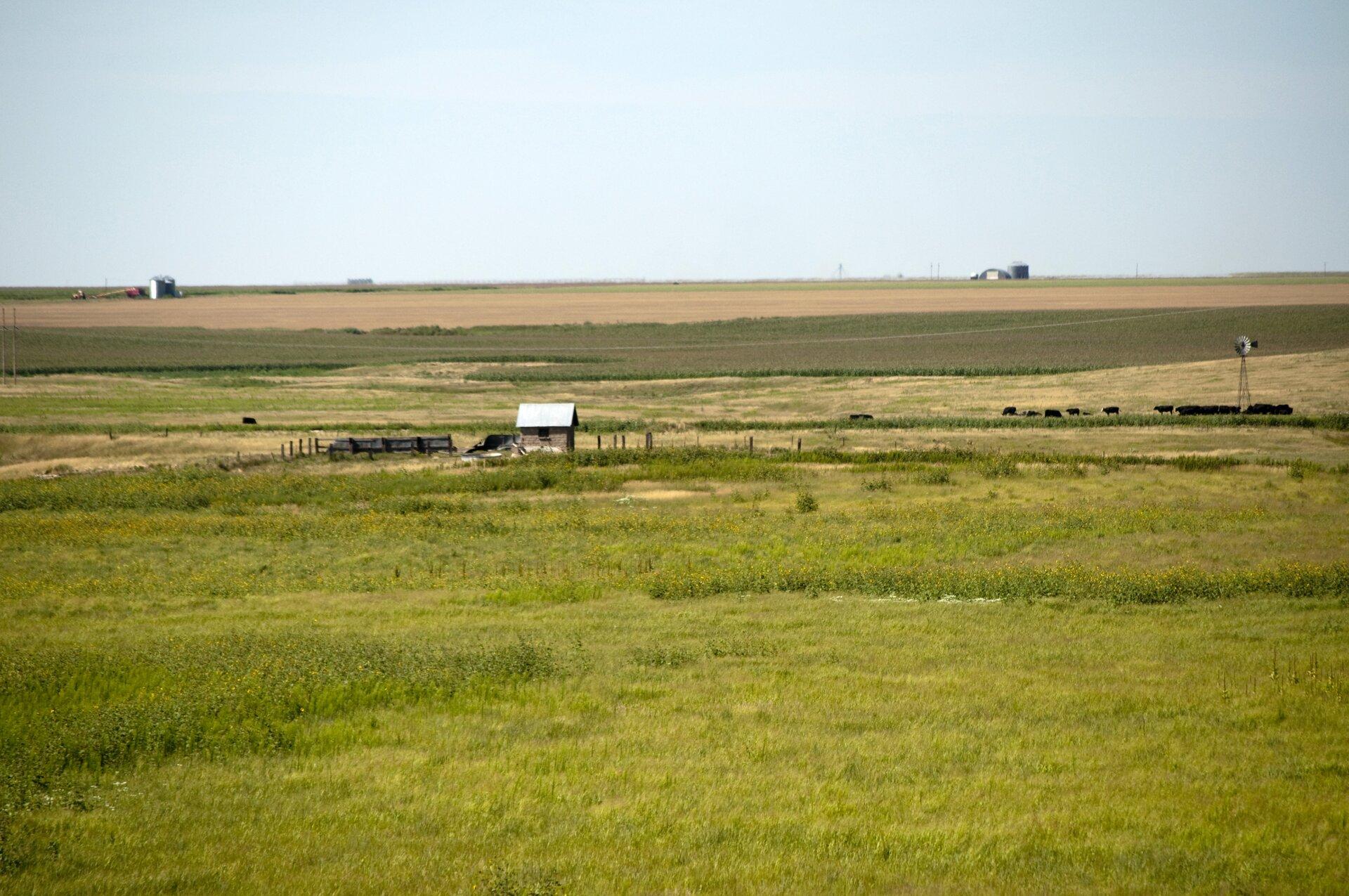 Na zdjęciu rozległe tereny porośnięte trawami. Stado zwierząt, pojedyncze zabudowania gospodarcze.