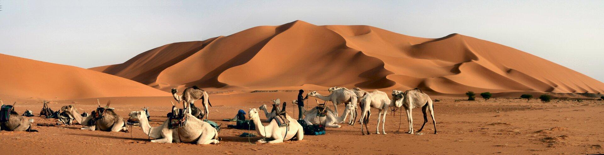 Na zdjęciu pustynia piaszczysta. Na pierwszym planie stado wielbłądów na płaskim terenie. Na drugim planie piaszczyste wydmy. Piasek wkolorze ceglastym. Na horyzoncie niebo.
