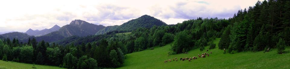 Fotografia ukazująca Pieniny, widać góry ozaokrąglonych wierzchołkach iłagodnych stokach, upodstawy których są lasy, łąki ipastwiska