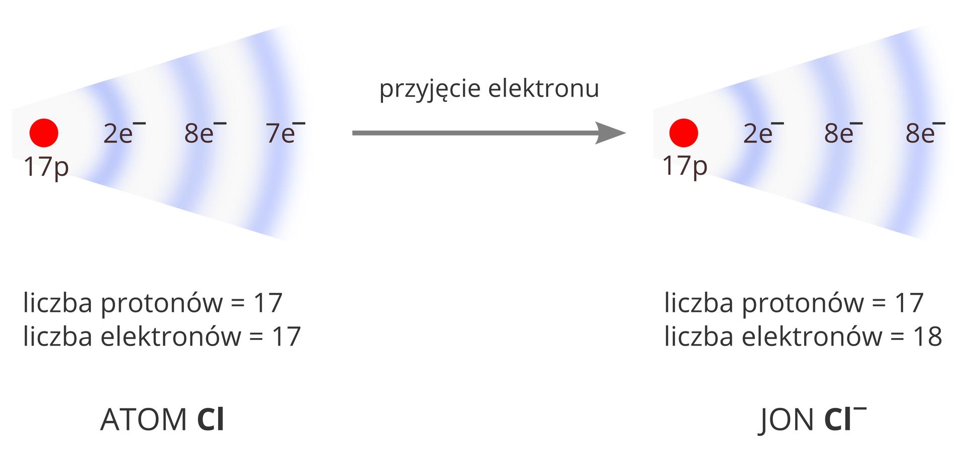 Schemat opisujący zmianę konfiguracji elektronowej atomu chloru podczas powstawania jonu. Po lewej stronie widoczny jest rysunek przedstawiający jądro atomu chloru wpostaci czerwonego koła podpisanego 17p oraz towarzyszącego mu biało-fioletowego wachlarza ilustrującego obecność trzech powłok elektronowych. Opisana jest też ich zawartość: 2 elektrony na pierwszej powłoce, 8 elektronów na drugiej powłoce isiedem elektronów na trzeciej powłoce. Rysunek podpisany jest następująco: liczba protonów równa 17, liczba elektronów równa 17. Atom Cl. Lewą stronę schematu zprawą łączy strzałka skierowana wprawo opisana przyjęcie elektronu. Po prawej stronie ponownie widoczny jest rysunek przedstawiający strukturę atomu chloru ztrzema powłokami elektronowymi mającymi kolejno dwa, osiem iosiem elektronów. Rysunek podpisany jest następująco: liczba protonów równa 17, liczba elektronów równa 18. Jon Cl-.
