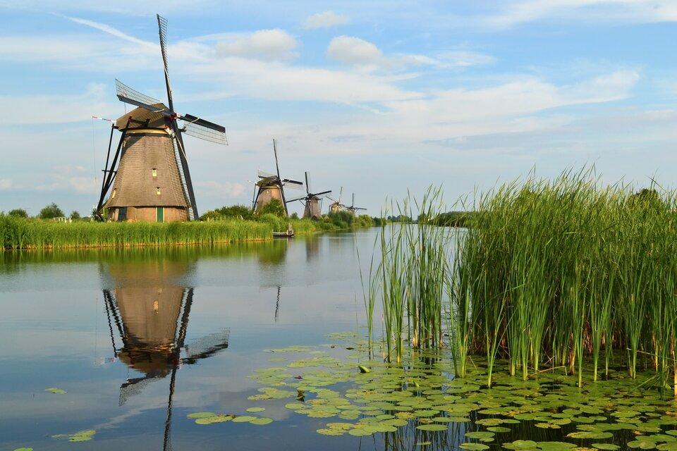 Cztery wiatraki stoją nad zbiornikiem wodnym. Przy brzegu trzciny, po powierzchni wody pływają liście lilii wodnych.