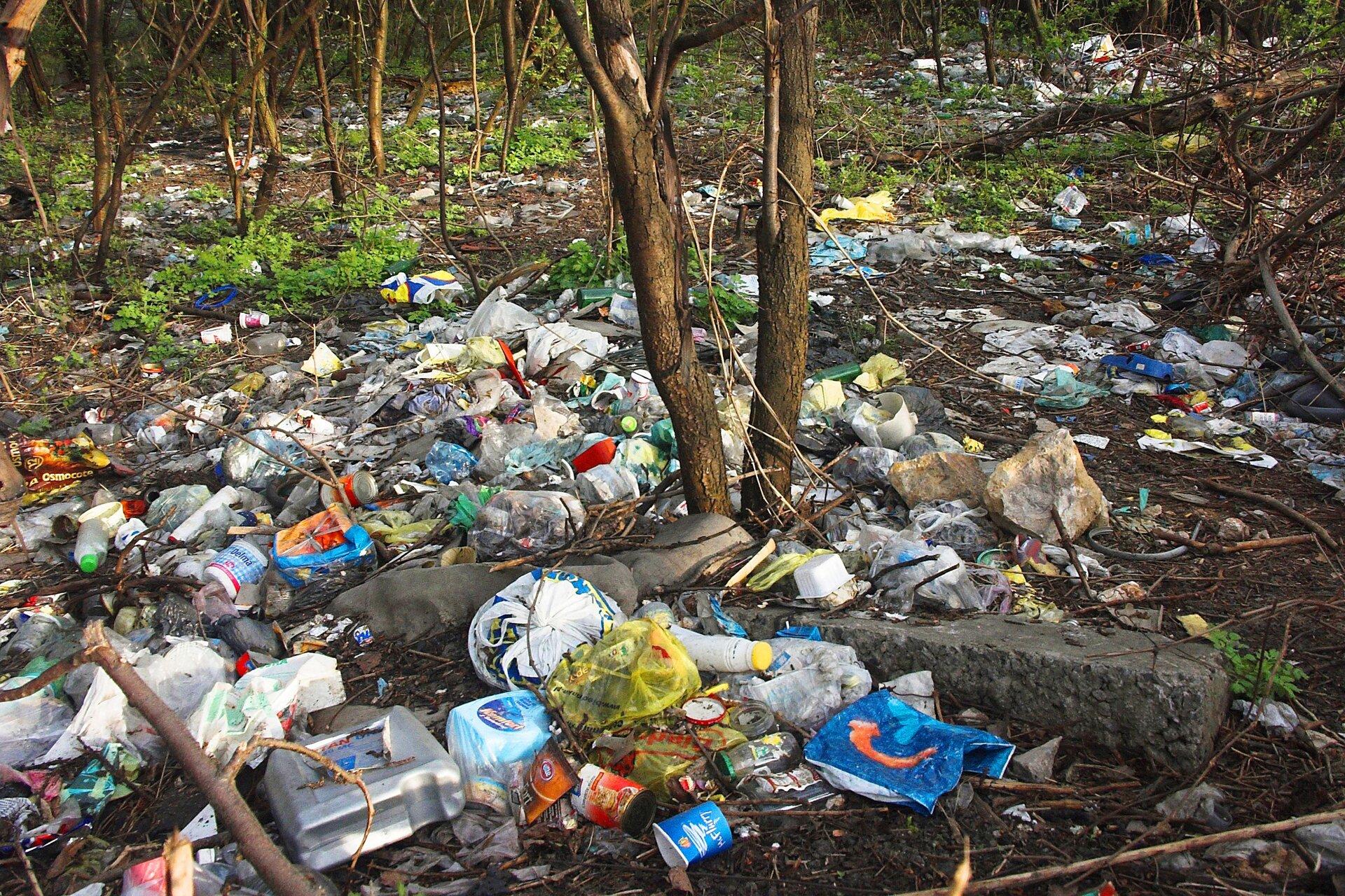 Na ziemi wlesie leży mnóstwo porozrzucanych śmieci – plastikowych butelek, kolorowych folii, słoików, puszek. Jest to nielegalne wysypisko śmieci.