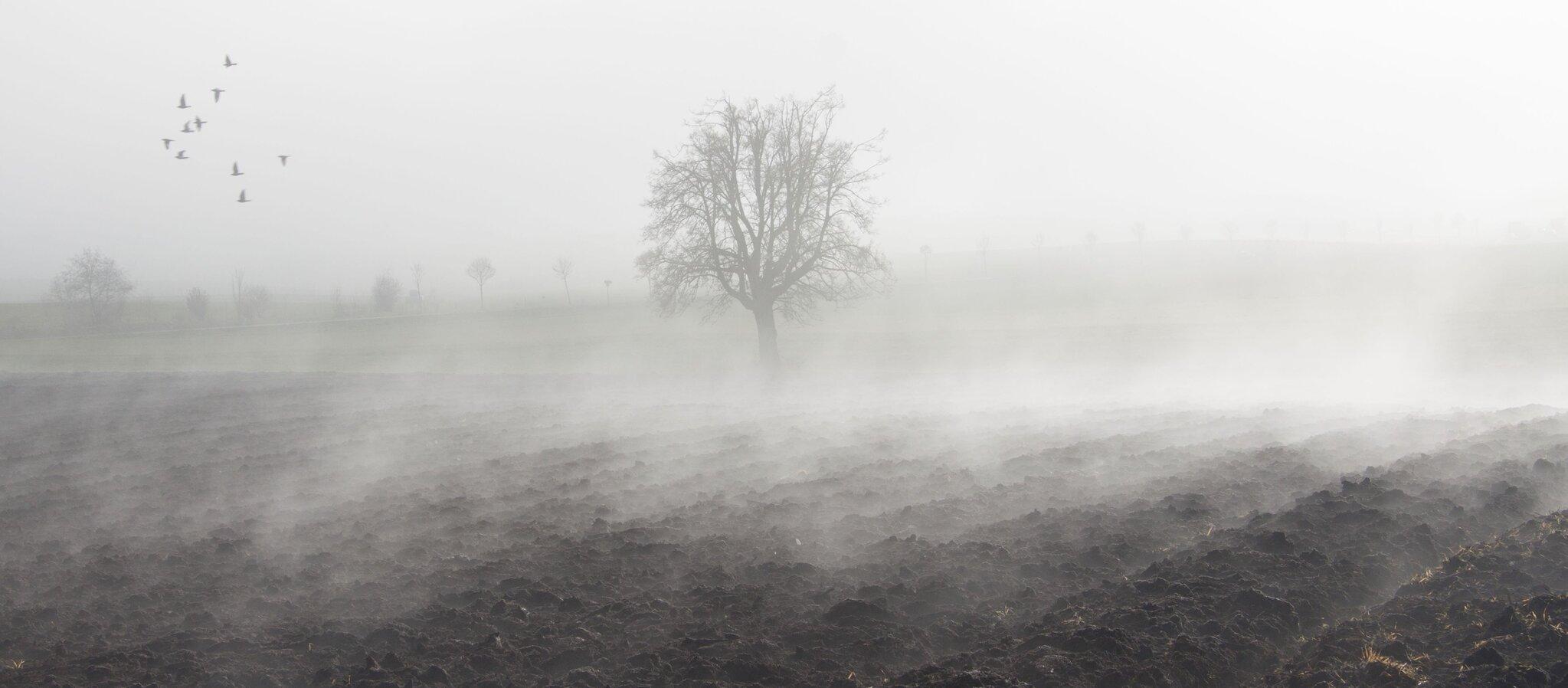 Mgła - stan między istnieniem anieistnieniem Źródło: Mgła - stan między istnieniem anieistnieniem, licencja: CC 0.