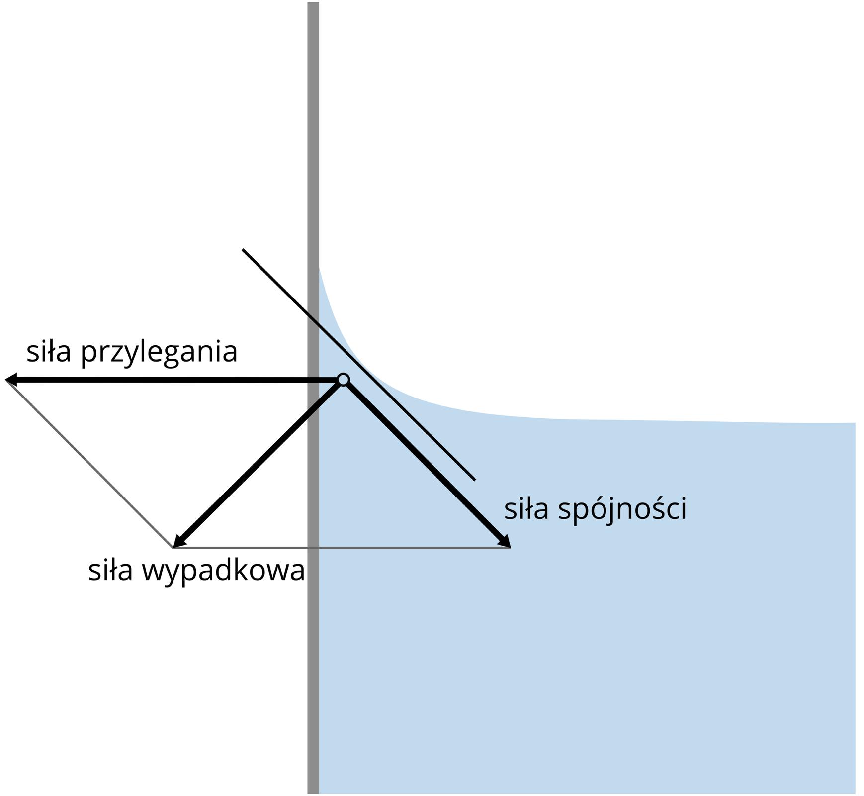 Ilustracja przedstawia mechanizm powstawania menisku wklęsłego. Schemat przedzielony na pół ponową linią. Linia szara. Lewa część schematu cała biała. Prawa część wgórnej połowie biała. Dolna część błękitna. Prawa część schematu imituje szklankę zwodą. Powierzchnia wody wśrodkowej części płaska. Tuż przy krawędzi ściany, powierzchnia wody delikatnie unosi się. Powierzchnia wody ikrawędź ściany nie tworzą kąta prostego. Na schemacie oznaczono strzałkami wektory trzech sił. Siły przylegania, siły spójności isiły wypadkowej.