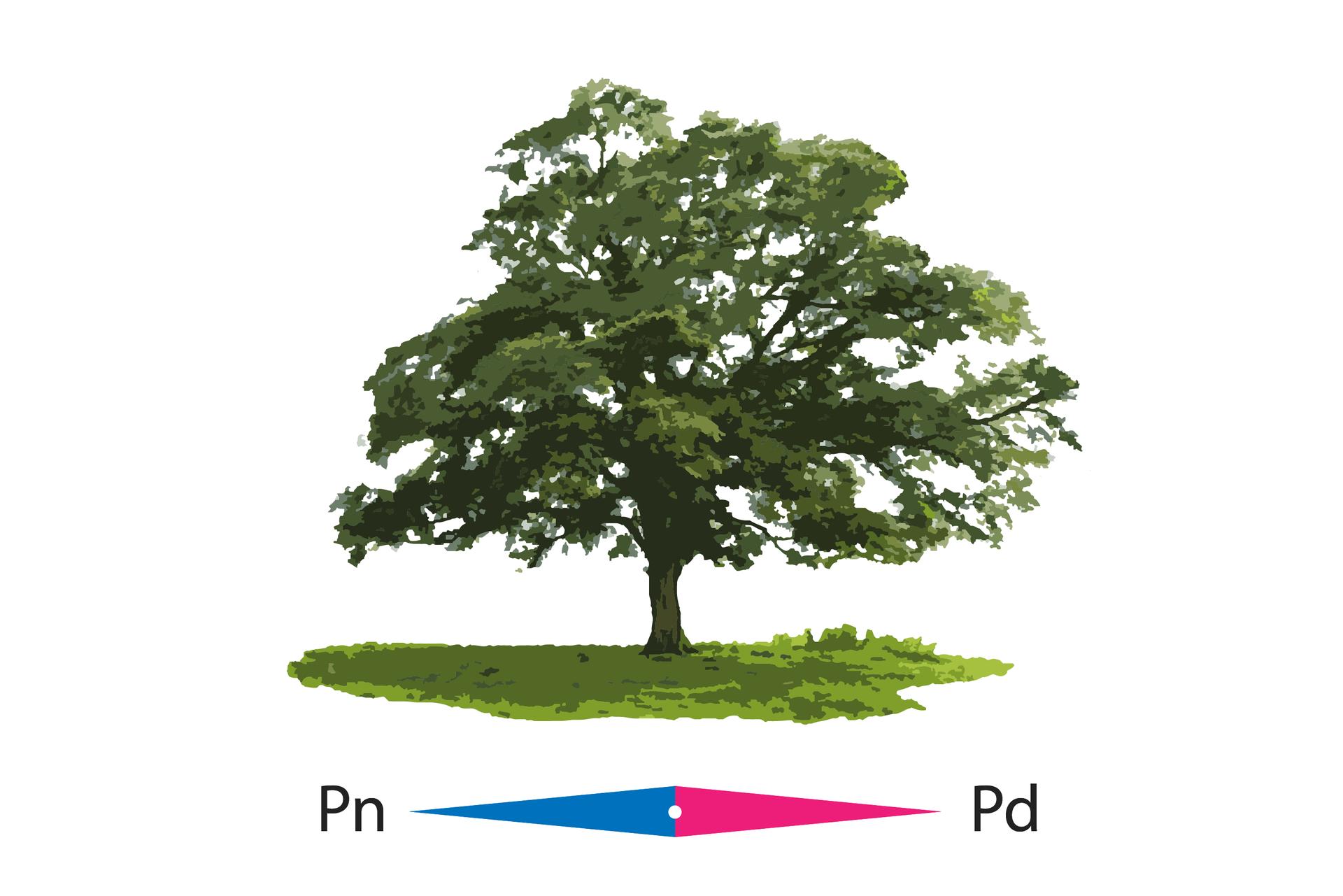 Na ilustracji znajduje się samotnie stojące drzewo, którego korona jest bardziej rozbudowana od strony południowej niż od północnej