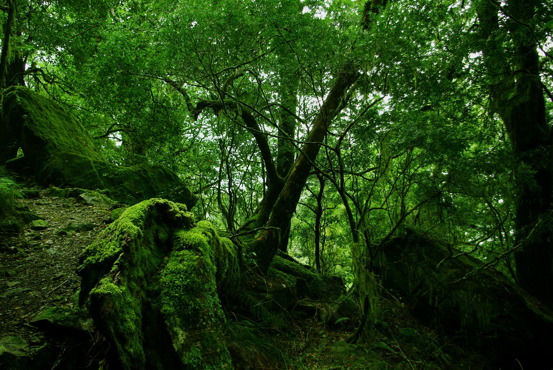 Fotografia czwarta prezentuje dno lasu porośnięte mchami.
