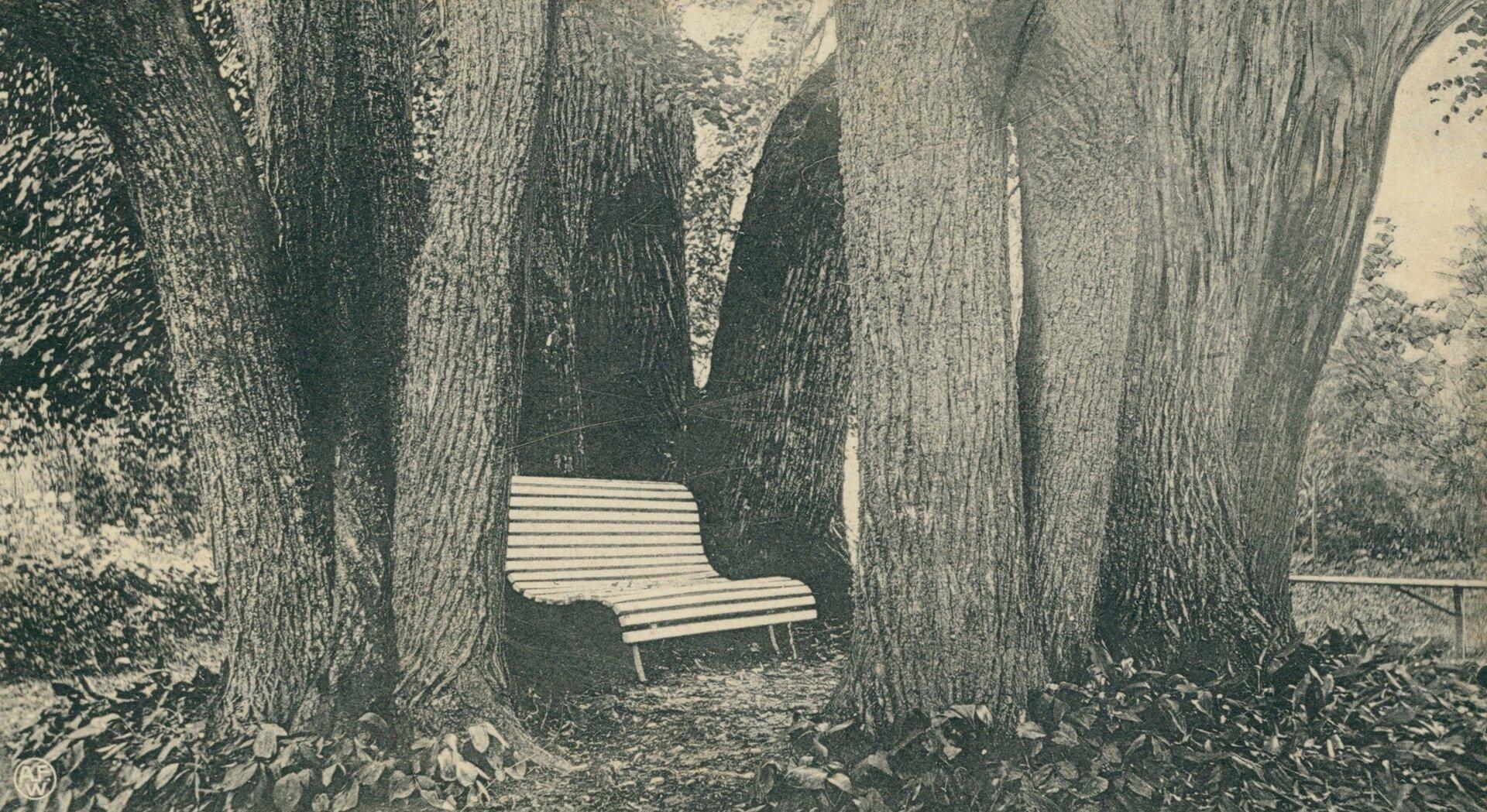 Nowogródek. Dąb-altana, gdzie Mickiewicz pracował wmłodości Nowogródek. Dąb-altana, gdzie Mickiewicz pracował wmłodości Źródło: 1912, pocztówka, domena publiczna.