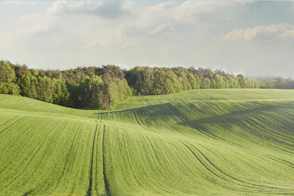 Na zdjęciu pofalowany teren rolniczy.