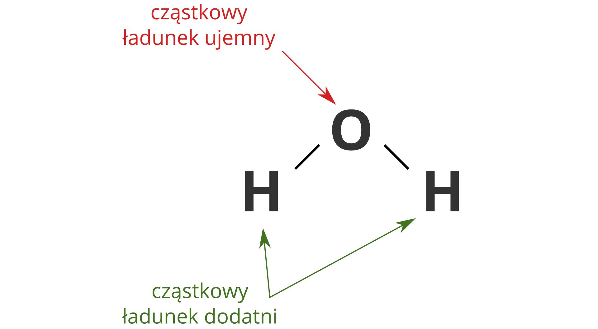 Ilustracja przedstawia zapisaną strukturalnie cząsteczkę wody. Symbol atomu tlenu pośrodku planszy, symbole atomów wodoru po bokach poniżej, pojedyncze kreski symbolizujące wiązania. Ugóry planszy czerwony napis Cząstkowy ładunek ujemny iczerwona strzałka prowadząca do symbolu tlenu. Udołu planszy zielony napis Cząstkowy ładunek dodatni izielone strzałki prowadzące do symboli wodoru.