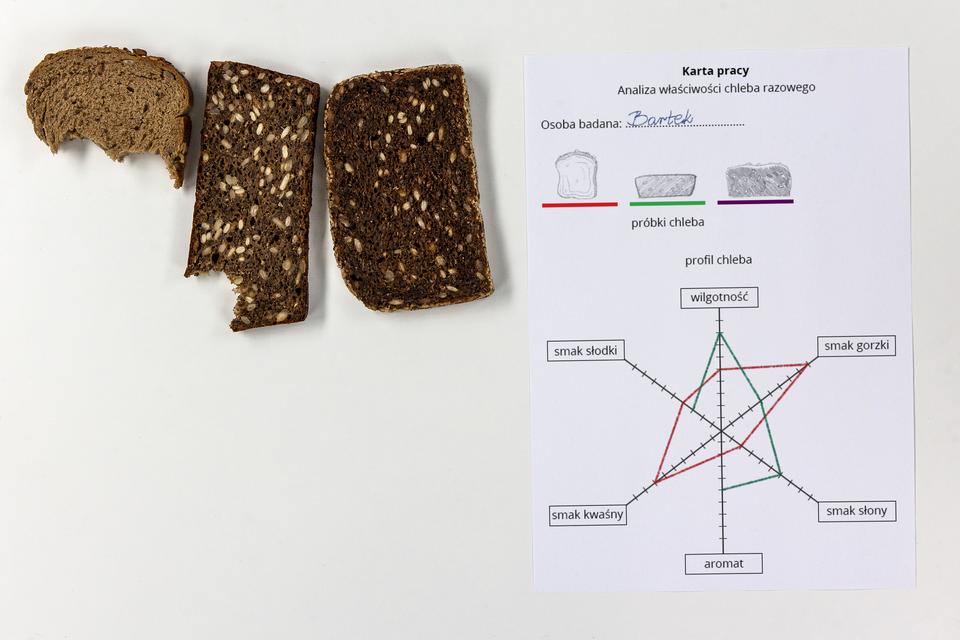 Fotografia przedstawia kartę pracy do analizy właściwości chleba razowego. Zlewej ugóry trzy kromki różnych chlebów, dwie nadgryzione. Zprawej na karcie rysunki kromek iwybrany dla każdej kolor linii. Pod spodem skala właściwości chleba (wilgotność, aromat, smak). Odpowiednim kolorem wrysowane profile dwóch przebadanych próbek chleba.