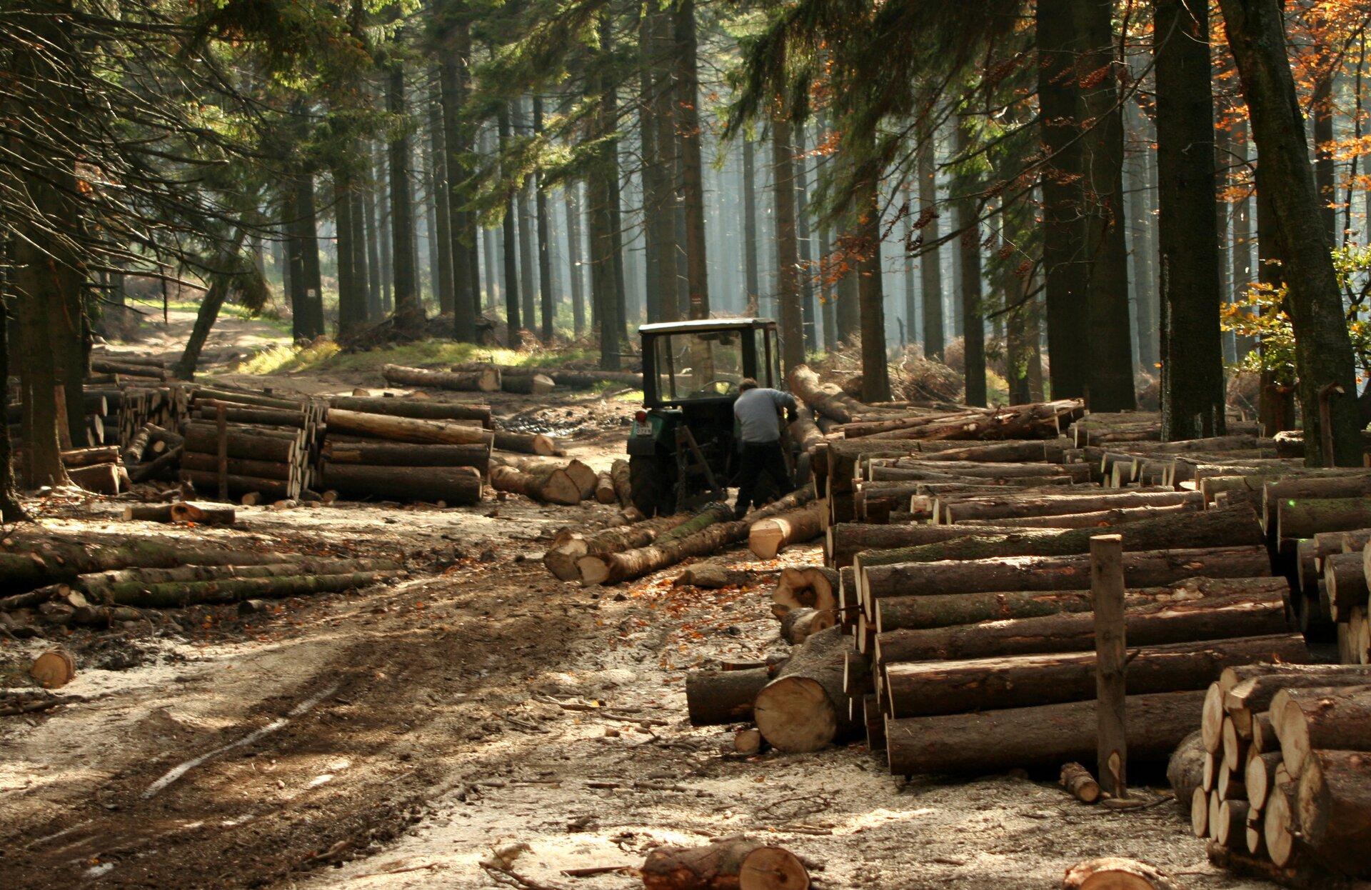 Fotografia przedstawia wnętrze lasu. Przy leśnej drodze stoi ciągnik iczłowiek obok. Wokół leżą pnie ściętych drzew, ułożone wsągi. Drewno należy do odnawialnych zasobów przyrody.