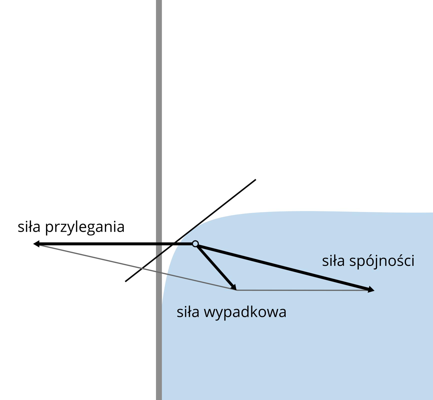 Ilustracja przedstawia mechanizm powstawania menisku wypukłego. Schemat przedzielony na pół ponową linią. Linia szara. Lewa część schematu cała biała. Prawa część wgórnej połowie biała. Dolna część błękitna. Prawa część schematu imituje szklankę zwodą. Powierzchnia wody wśrodkowej części płaska. Tuż przy krawędzi ściany, powierzchnia wody delikatnie opada. Powierzchnia wody ikrawędź ściany nie tworzą kąta prostego. Na schemacie oznaczono strzałkami wektory trzech sił. Siły przylegania, siły spójności isiły wypadkowej.