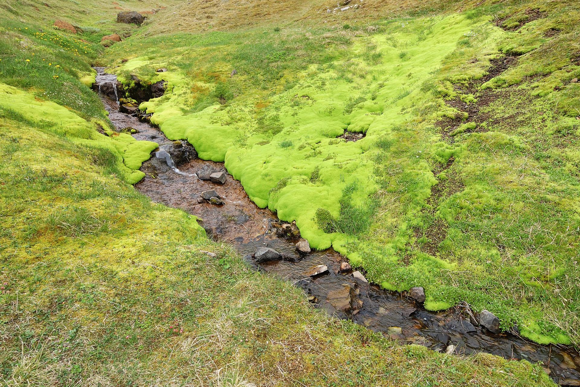 """Fotografia przedstawia niewielki strumień, płynący po skalistym podłożu. Brzegi strumienia pokryte są zielonymi """"poduchami"""" mchów. Obok rośnie trawa."""