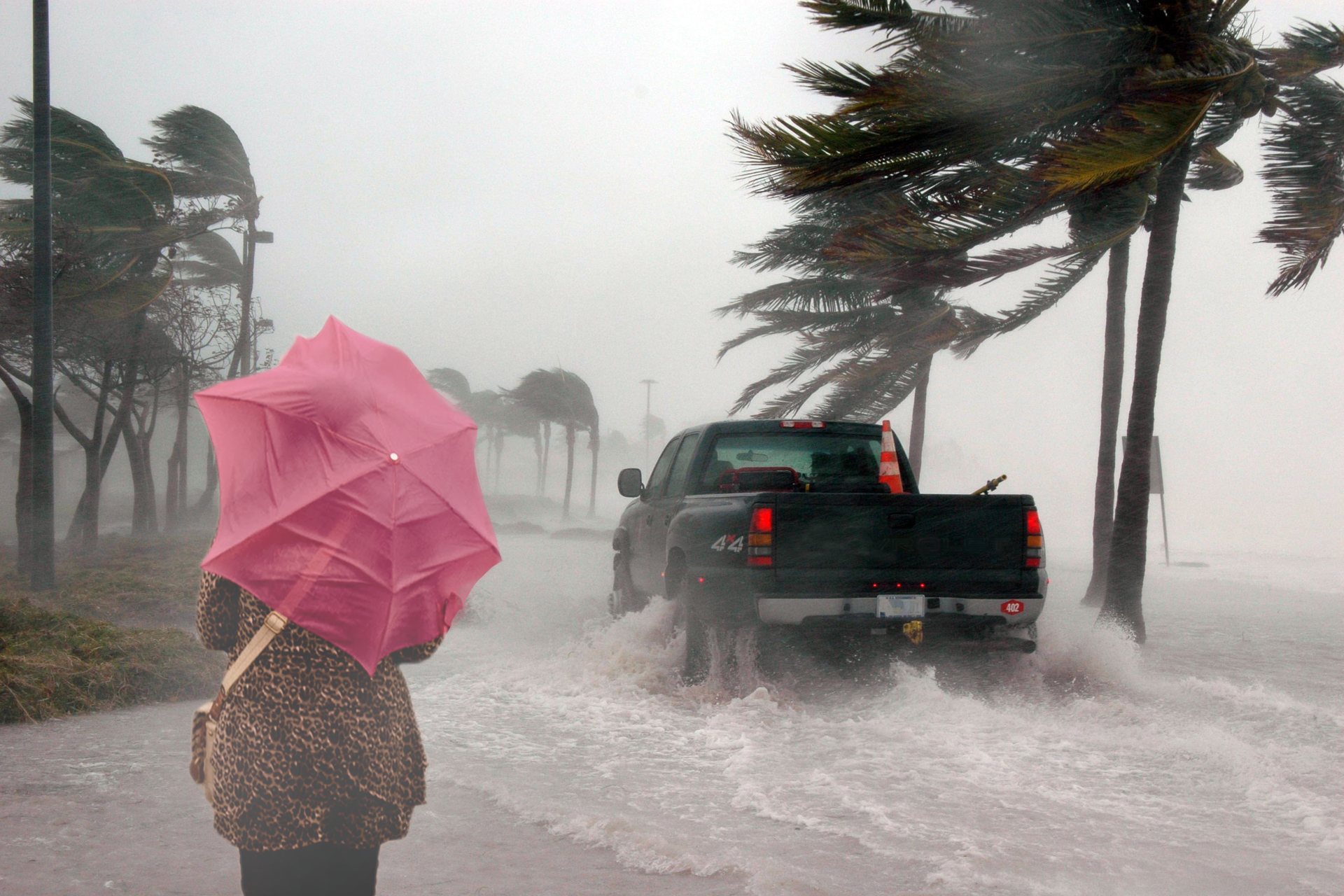 Kolorowe zdjęcie przedstawia drogę blisko wybrzeża. Po prawej stronie nadbrzeże. Wzdłuż drogi wysokie palmy. Na drodze samochód osobowy. Droga zalana jest wodą napływającą zprawej strony. Siła wiatru jest tak duża , że wygina gałęzie palm wlewo oraz spycha wodę daleko wgłąb lądu. Po lewej stronie drogi idzie kobieta trzymając mocno parasol. Kobieta tyłem do obserwatora zdjęcia. Wiatr mocno uderza wpowierzchnię parasola. Wgłębi zdjęcia pozostałe drzewa zgałęziami powyginanymi wlewo.