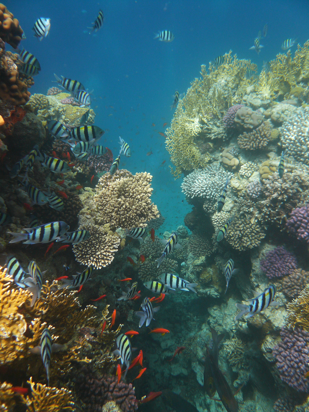 Wgalerii znajdują się fotografie przedstawiające bogactwo życia na rafie koralowej. Fotografia przedstawia rafę koralową. Tworzą ją kolonie wielobarwnych koralowców. Jamochłony mają różne kształty. Między nimi pływają czerwone ipasiaste ryby.