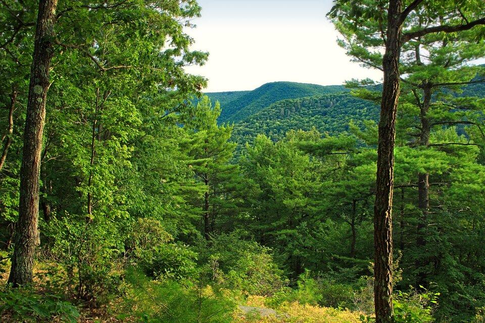 Fotografia przedstawia las mieszany zdrzewami iglastymi iliściastymi. Las gęsty, mało przejrzysty.