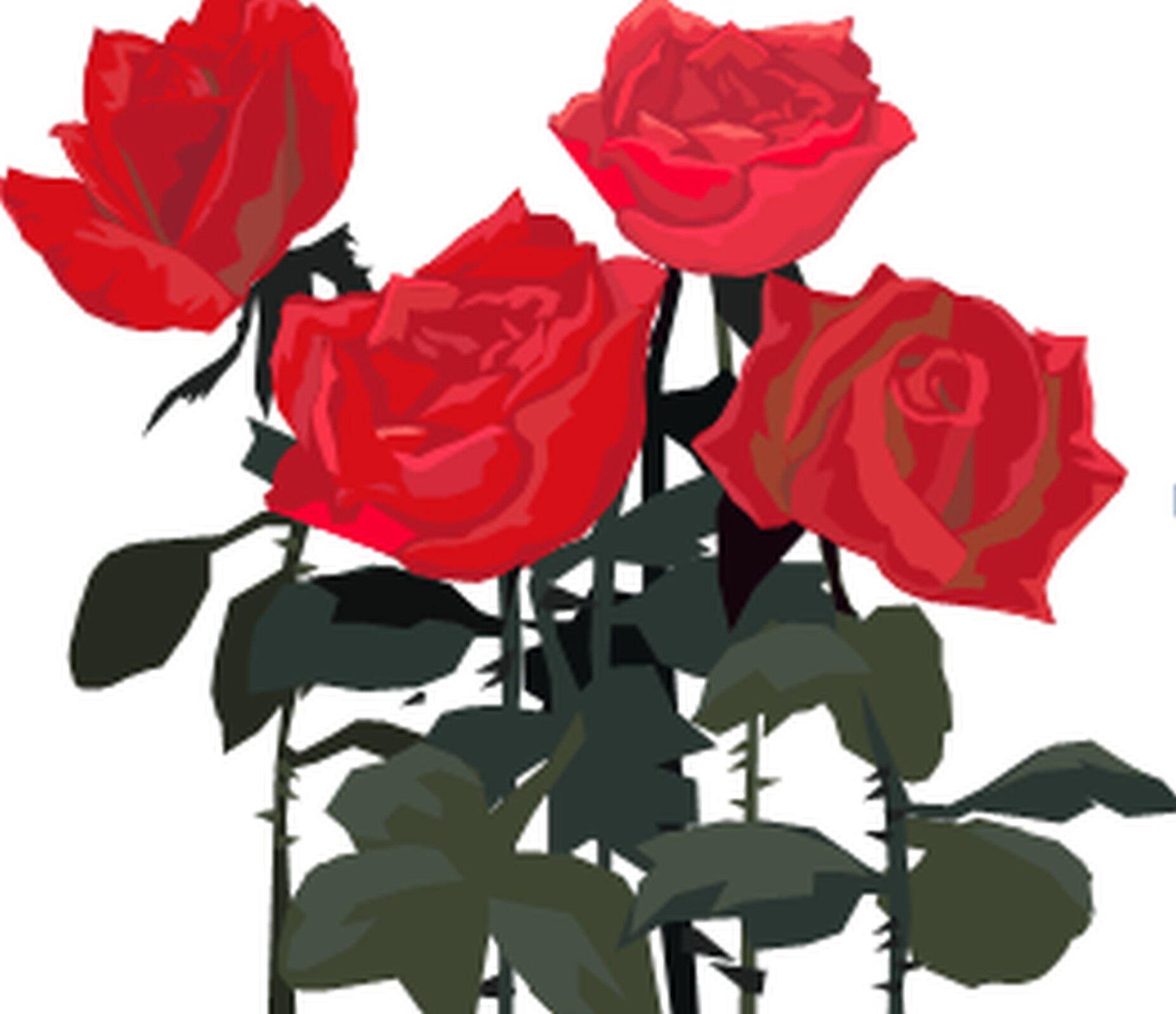 Rysunek czterech róż.