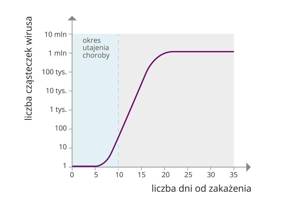 Druga ilustracja wgalerii to wykres przedstawiający tempo namnażania się dwóch różnych wirusów. Oś pozioma wykresu to liczba dni od zakażenia. Oś pozioma podzielona jest równomiernie (skala liczbowa co 5 dni czyli 0, 5, 10 itd. aż do 50). Oś pionowa wykresu to liczba cząsteczek wirusa. Jej skala liczbowa jest podzielona na przedziały: 1, 10, 100, 1 tys. aż do 10 milionów. Przedziały pomiędzy wartościami na skali są jednakowe. Na wykresie widoczne są dwie krzywe. Pierwsza krzywa rozpoczyna się w5. dniu na osi poziomej iprawie pionowo wzrasta wgórę sięgając liczby miliona cząsteczek wirusa. Po około 15 dniach linia przebiega prawie poziomo aż do dnia 50. Druga krzywa rozpoczyna się około 10. Dnia. Wznosi się do góry łagodniej niż pierwsza krzywa. Przekracza liczbę 100 tysięcy cząsteczek wirusa po około 25 dniach inastępnie nieco opada, zatrzymując się 45. dnia na poziomie 10 tysięcy.