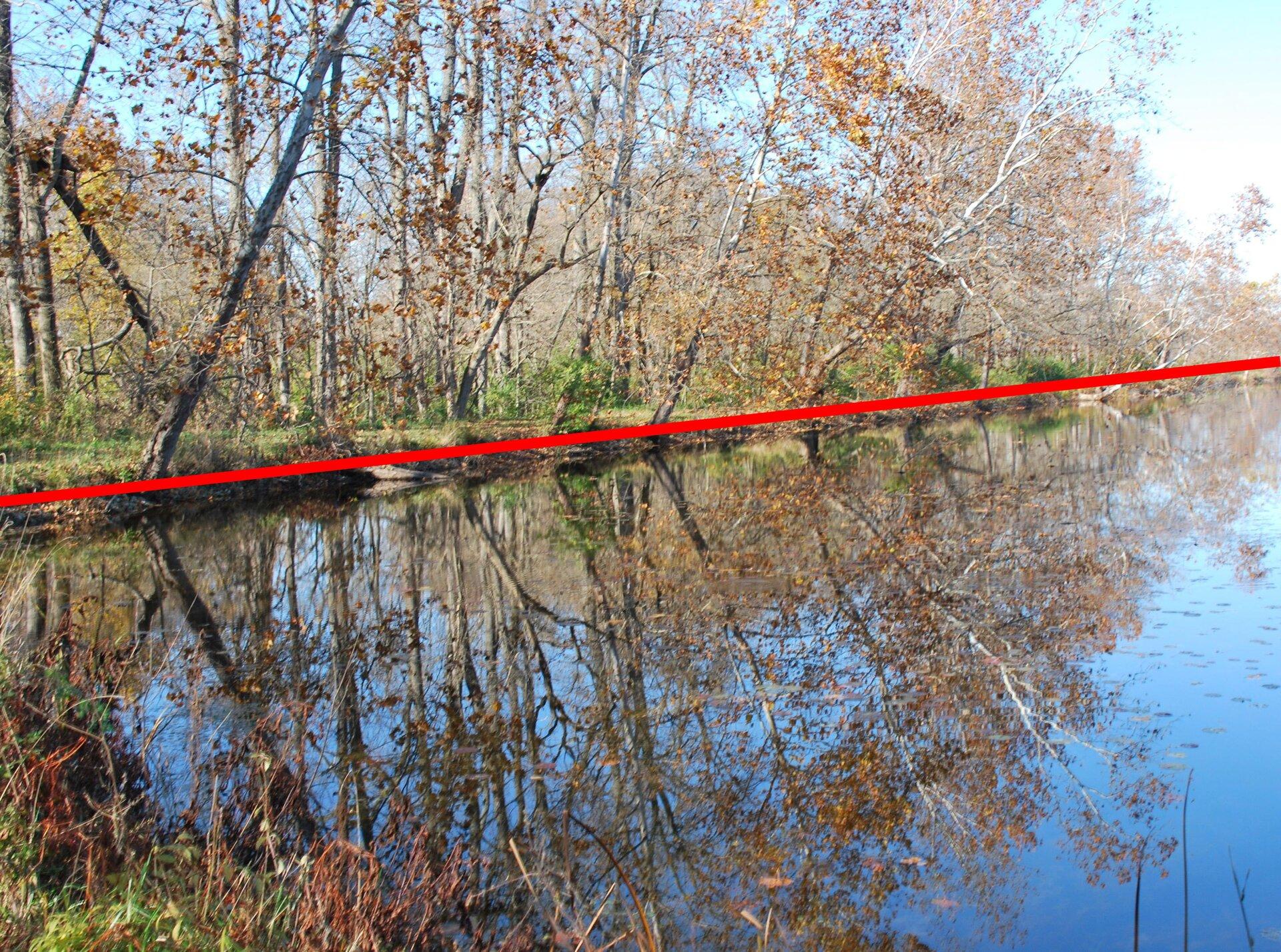 Zdjęcie drzew rosnących wzdłuż brzegu rzeki iodbicie tych drzew wwodzie zpoprowadzoną osią symetrii.