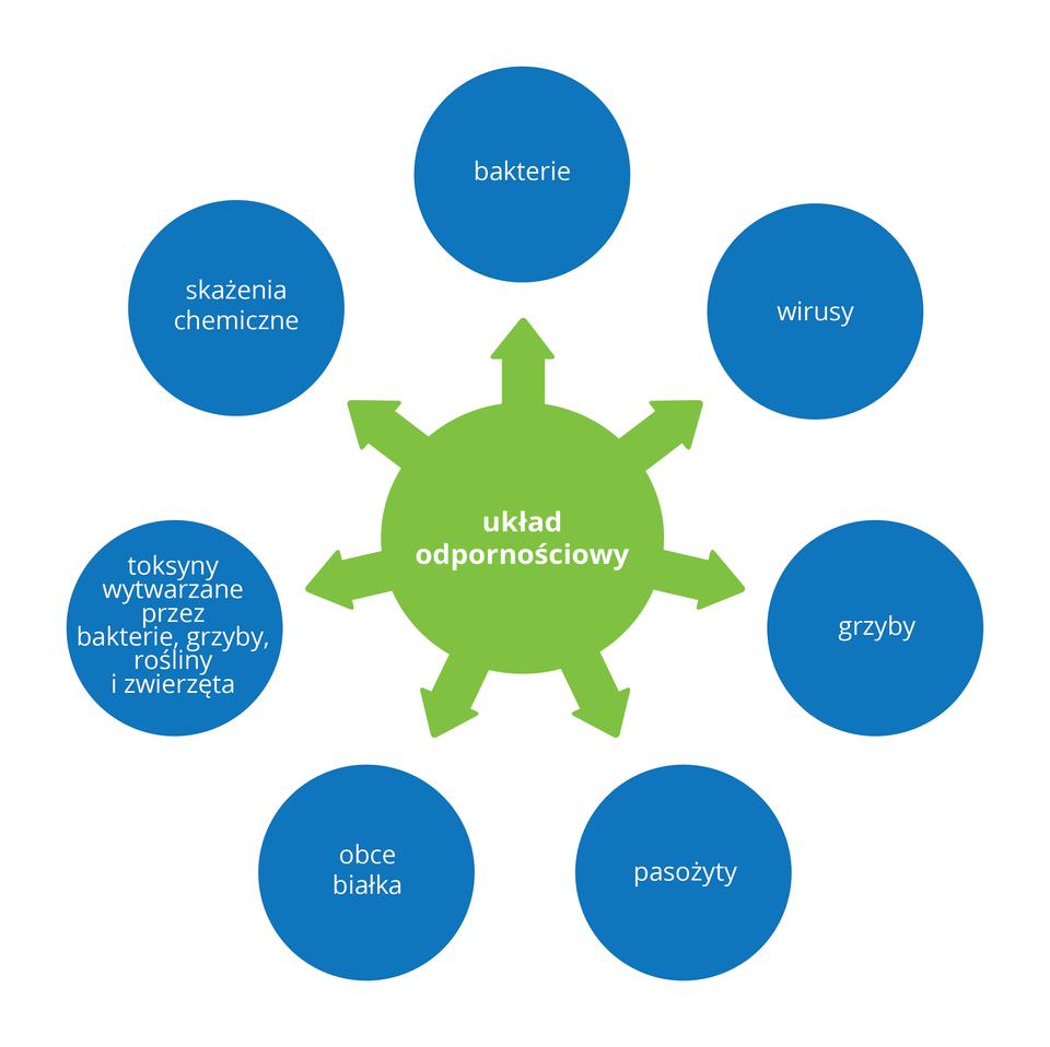 Schemat wformie szafirowych kół przedstawia czynniki, na które reaguje układ odpornościowy (zielone koło ze strzałkami). Czynniki to od góry wprawo: bakterie, wirusy, grzyby, pasożyty, obce białka, toksyny, skażenia chemiczne. Toksyny mogą być wytwarzane przez bakterie, grzyby, rośliny izwierzęta.
