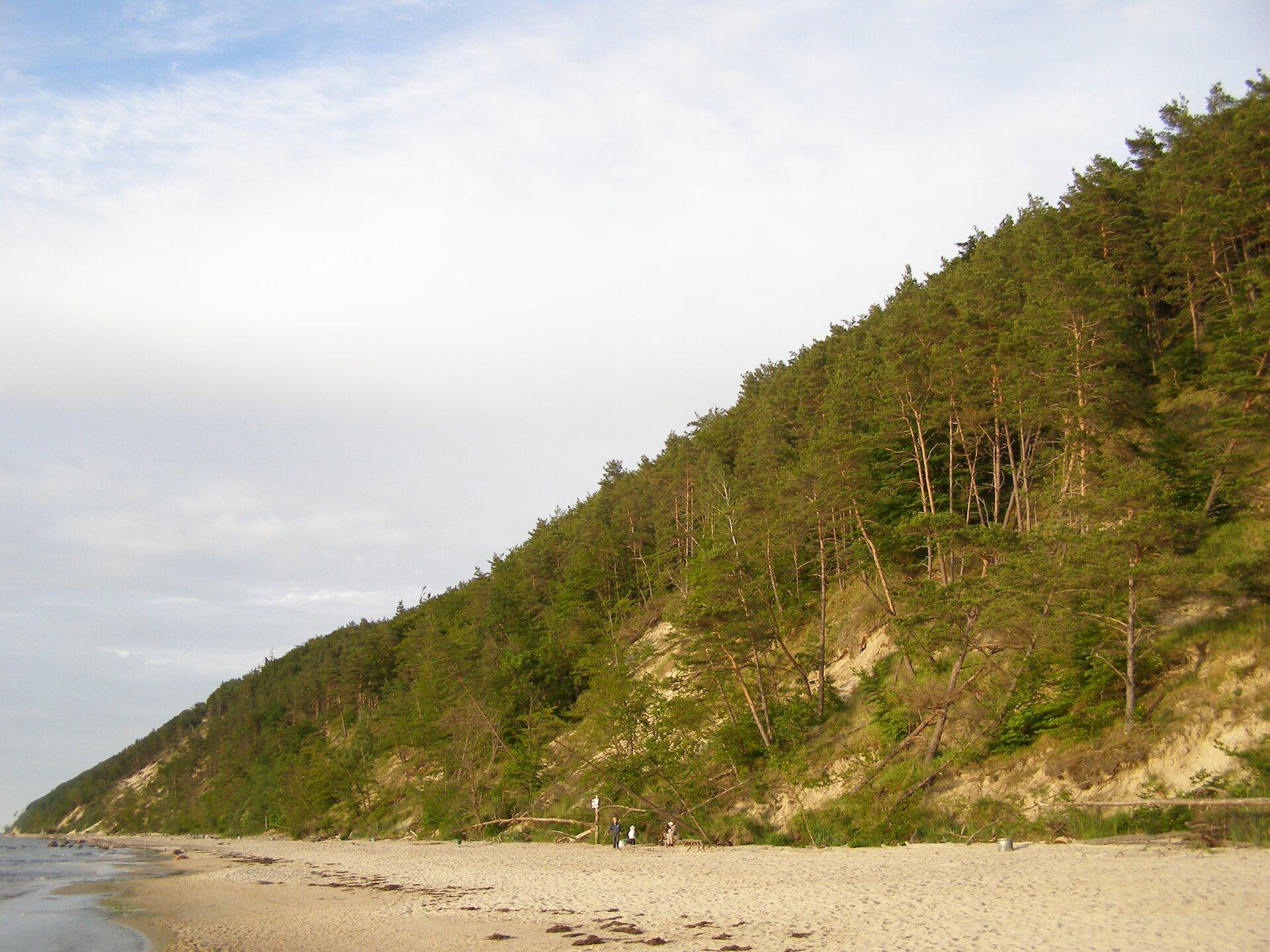 Zdjęcie przedstawia wysokie istrome klify, znajdujące się nad Bałtykiem. Klif porośnięty jest sosnami oraz inną roślinnością.