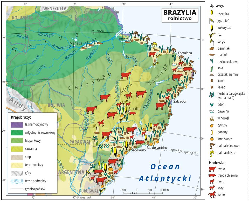 Ilustracja przedstawia mapę rolnictwa Brazylii. Na mapie uwzględniono następujące strefy roślinne: las namorzynowy, wilgotny las równikowy, las parkowy, sawanna, step. Sygnaturami oznaczono uprawy: pszenica, jęczmień, kukurydza, ryż, sorgo, ziemniaki, maniok, trzcina cukrowa, soja, orzeszki , ziemne, kawa, kakao, herbata paragwajska (yerba maté), tytoń, bawełna, winorośl, cytrusy, banany, inne owoce, palma kokosowa ipalma oleista. Hodowla: bydło, trzoda chlewna, owce, kozy ikonie. Sygnatury występują jedynie we wschodniej części Brazylii, nad morzem. Mapa pokryta jest równoleżnikami ipołudnikami. Dookoła mapy wbiałej ramce opisano współrzędne geograficzne co dziesięć stopni. Wlegendzie umieszczono iopisano znaki użyte na mapie.