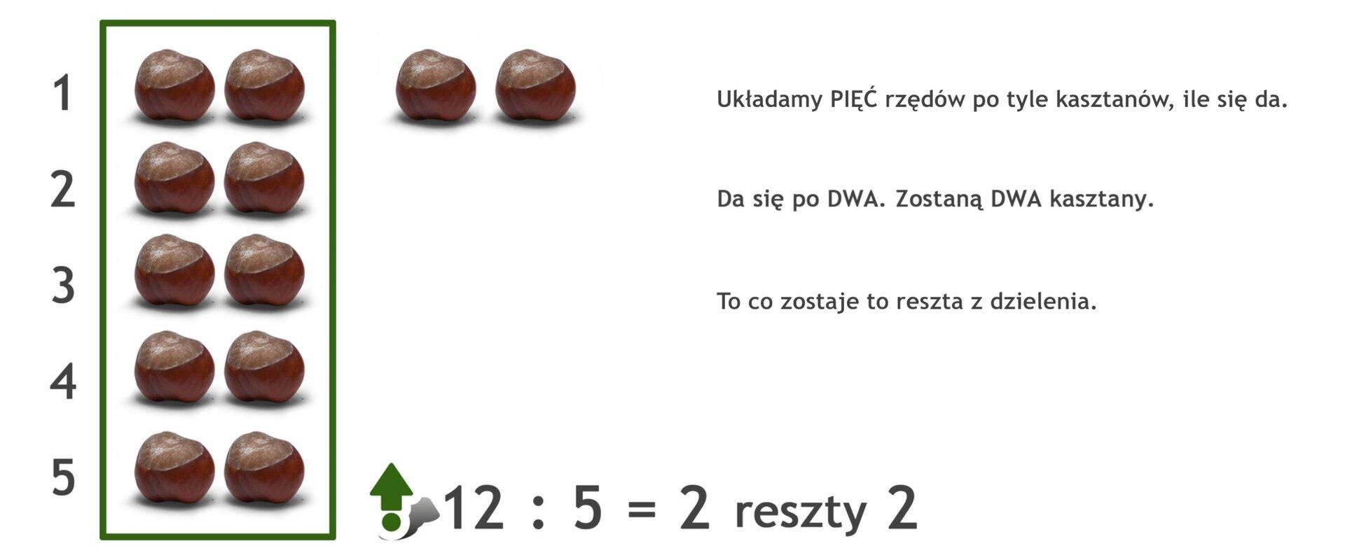 Na rysunku 12 kasztanów. Podzielono je na 5 rzędów po dwa kasztany wkażdym. Zostały 2 kasztany. Działanie: 12 dzielone przez 5 =2 reszty 2.