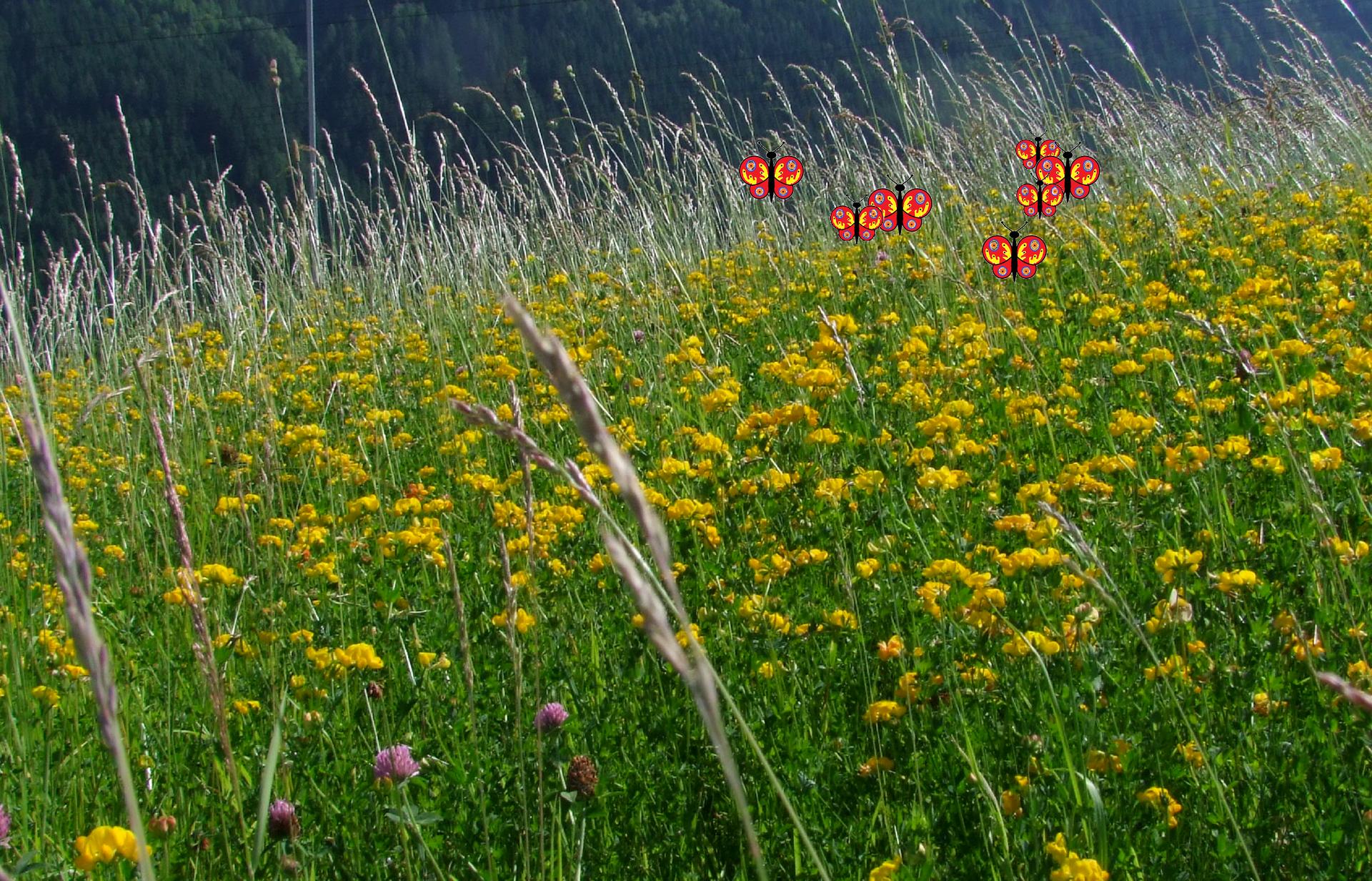Fotografia przedstawiająca łąkę zmotylkami