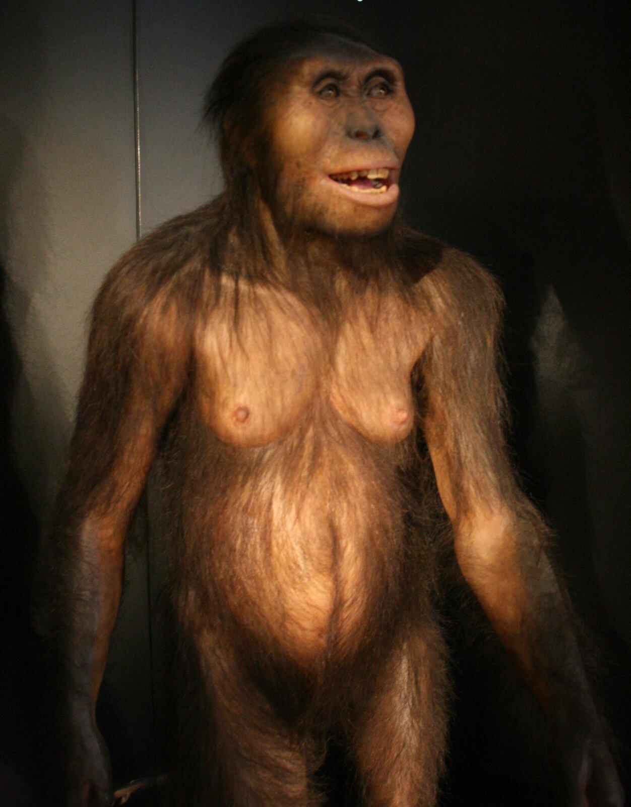 Fotografia przedstawia rekonstrukcję samicy australopiteka. Stoi wyprostowana, wprawej ręce trzyma patyk. Ma długie czarne włosy na głowie, tułowiu ikończynach, jedynie sutki są mniej owłosione. Jej oczy patrzą bystro, usta zwargami są rozciągnięte wuśmiechu.