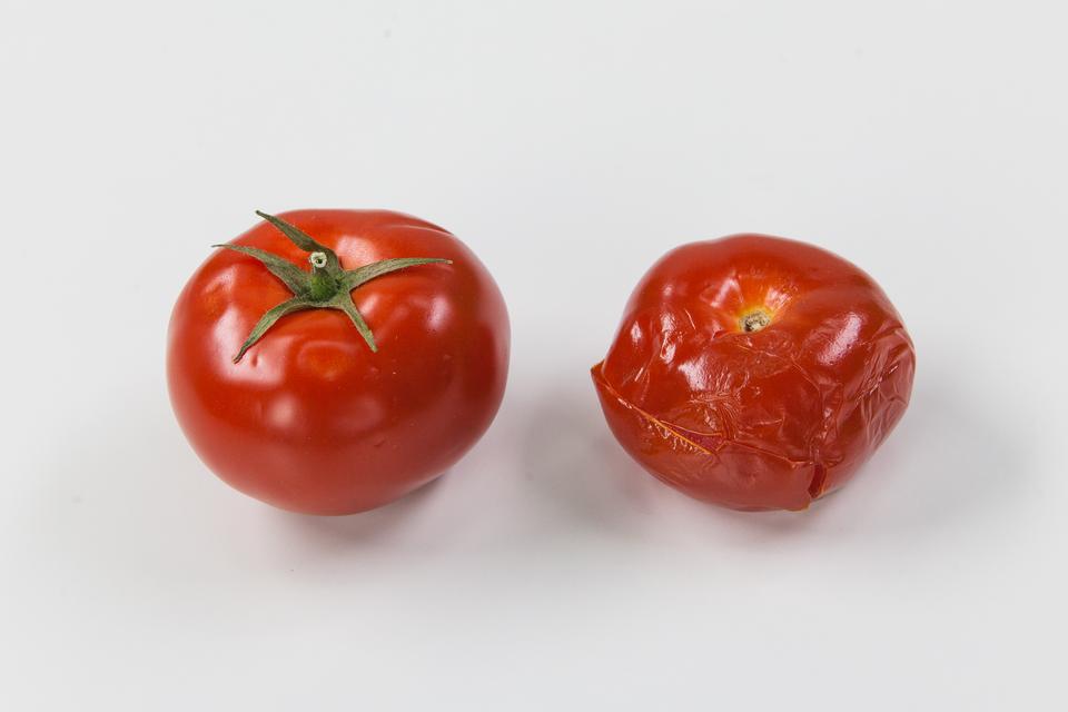 Fotografia przedstawia dwa czerwone pomidory. Po lewej jest soczysty, po prawej miękki, gnijący. Pomidor po lewej to odmiana zmodyfikowana genetycznie, odporna na gnicie.