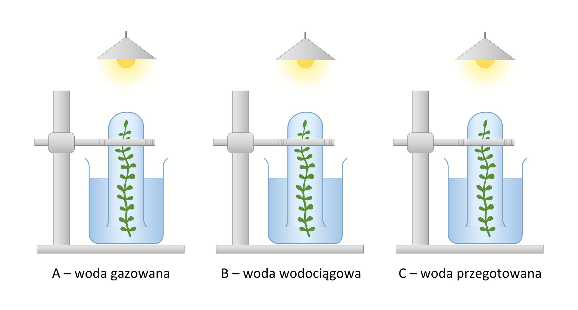 Grafika ilustrująca przebieg doświadczenia mającego na celu zadanie wpływu dwutlenku węgla na intensywność fotosyntezy