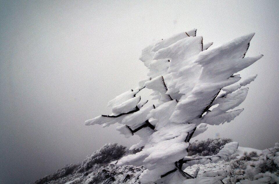 Zdjęcie przedstawia szadź, która pokrywa całe drzewa igałęzie. Drobiny kryształków lodu przylegają do siebie bardzo mocno igęsto. Kryształki osadzone są jeden na drugim. Osadzając się jeden na drugim tworzą twory oróżnych kształtach ostro zakończone.
