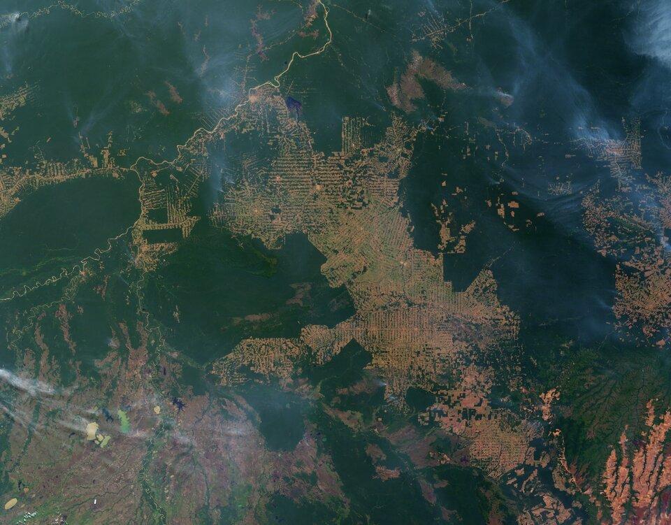 Ilustracja przedstawia wylesianie wbrazylijskim stanie Rondonia. Na satelitarnym zdjęciu widać zlikwidowane olbrzymie połacie puszczy amazońskiej – kolor żółty. Obszary porośnięte puszczą mają kolor ciemnozielony.
