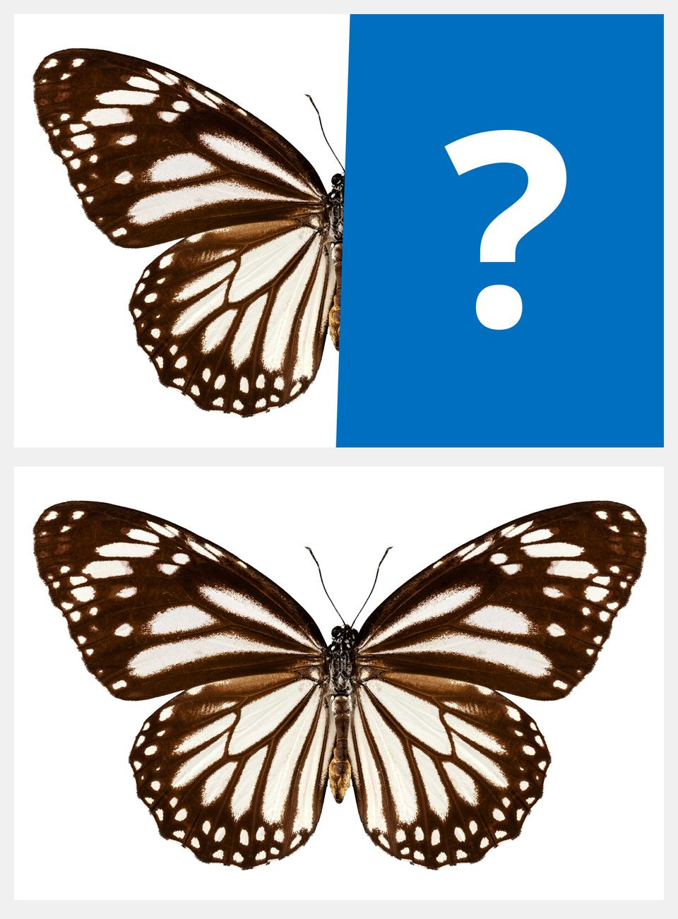 Ilustracja interaktywna jest podzielona na dwie części. Przedstawia połowę motyla wykonanego wsepii. Drugą część zajmuje niebieski prostokąt ze znakiem zapytania. Po odwróceniu ilustracji zostaje zaprezentowana praca, ukazująca tego motyla wcałości. Owad jest symetryczny.