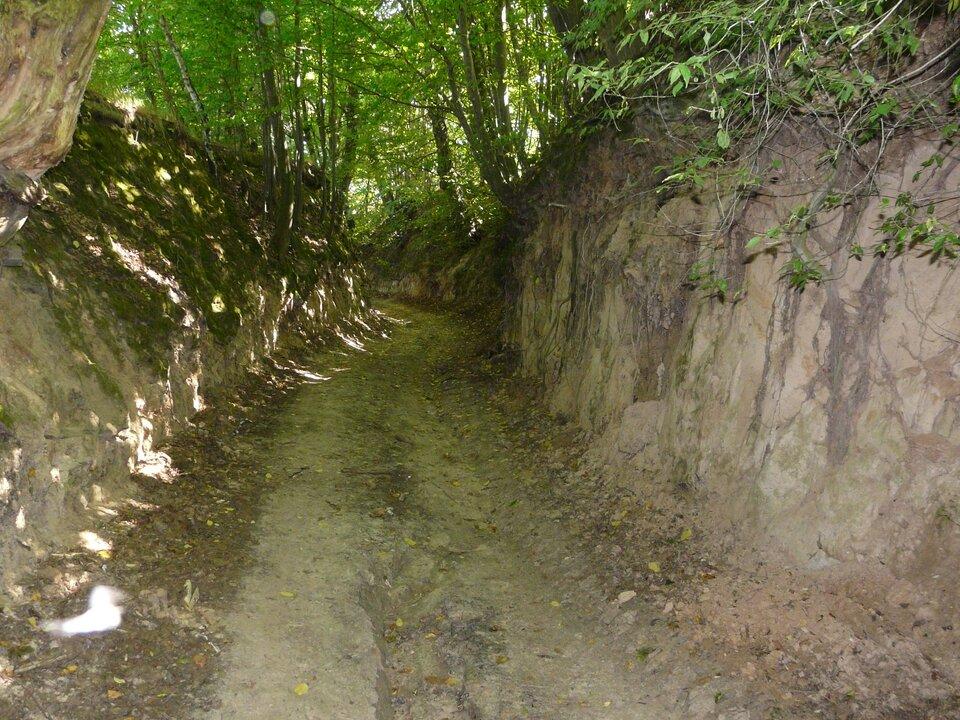 Na zdjęciu wąwóz ostromych zboczach ipłaskim dnie. Odsłonięte korzenie roślin.