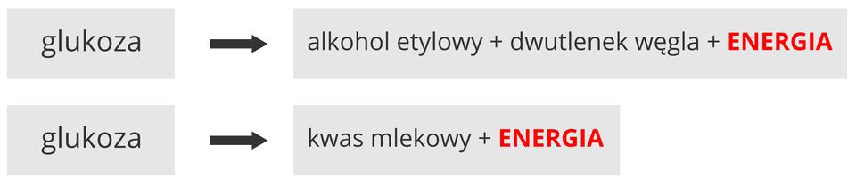 Ilustracja przedstawia cztery szare prostokąty wdwóch rzędach. Zapisano wnich schemat przebiegu dwóch rodzajów oddychania beztlenowego, czyli fermentacji. Napis energia ma kolor czerwony. Wpierwszym rzędzie od glukozy czarna strzałka prowadzi do działania: alkohol etylowy plus dwutlenek węgla plus energia. Jest to zapis fermentacji alkoholowej.W drugim rzędzie od glukozy czarna strzałka wskazuje zapis: kwas mlekowy plus energia. Oznacza to fermentację mlekową.