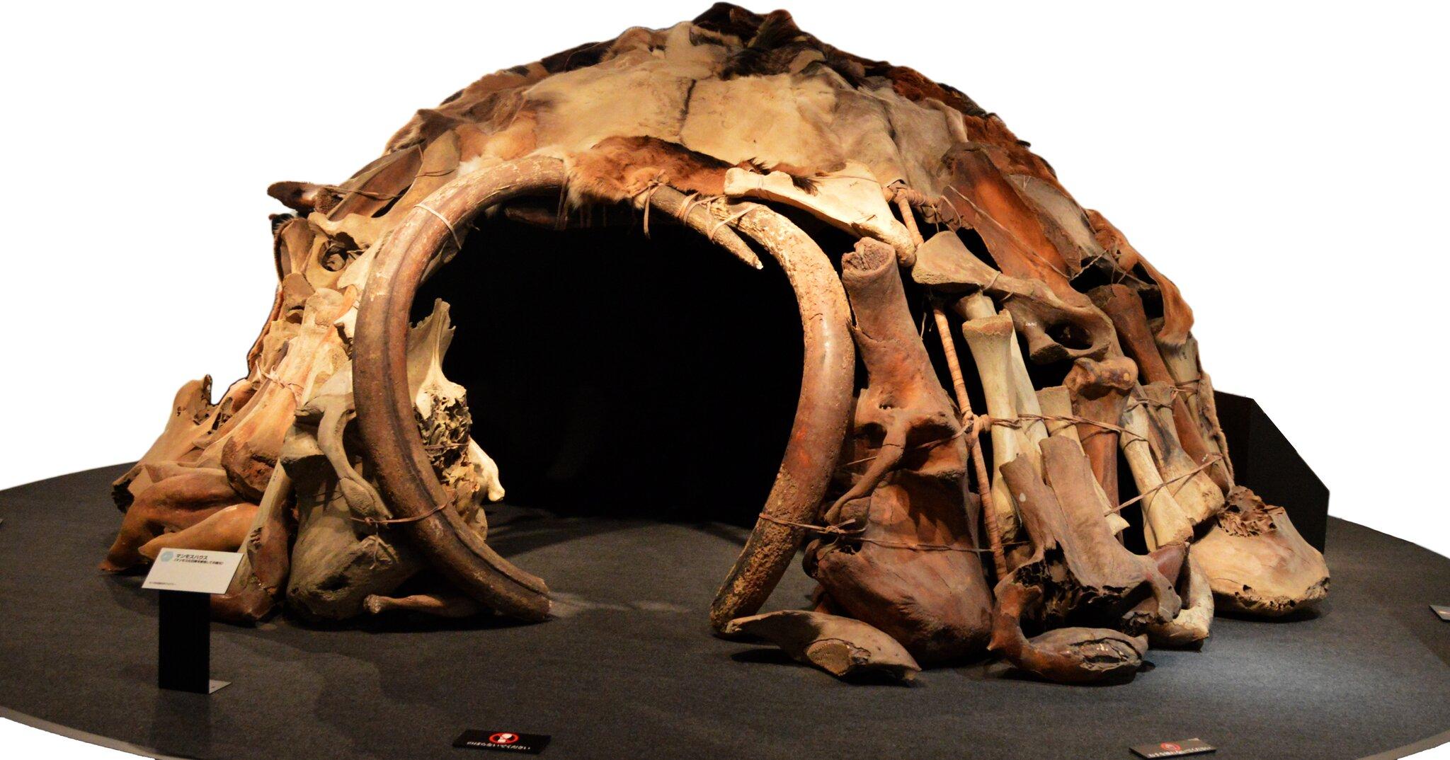 Szał…as wybudowany zkości zwierzęcia, pokryty skórami