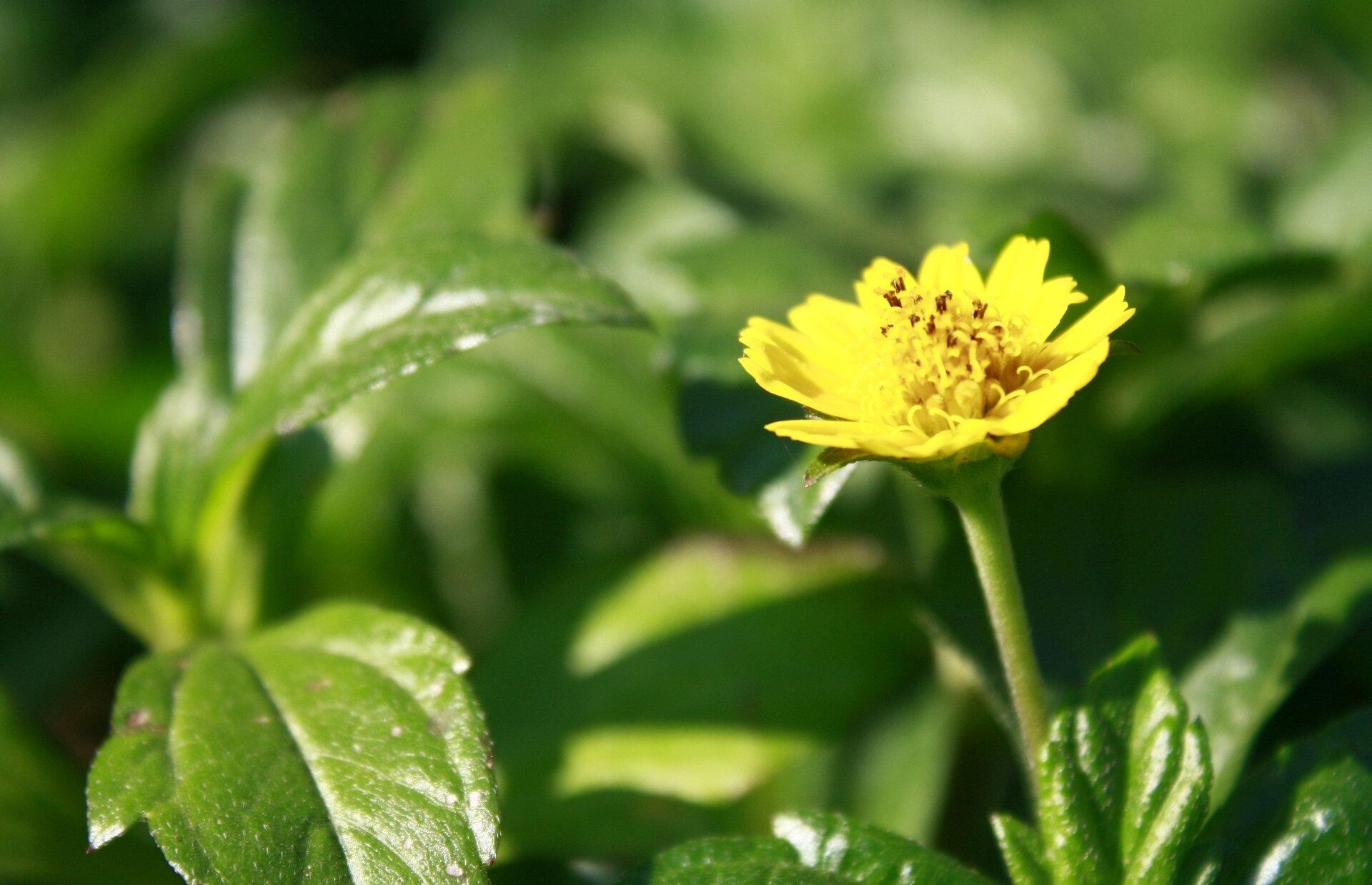 Kwiat rosnący dziko Źródło: licencja: CC 0.
