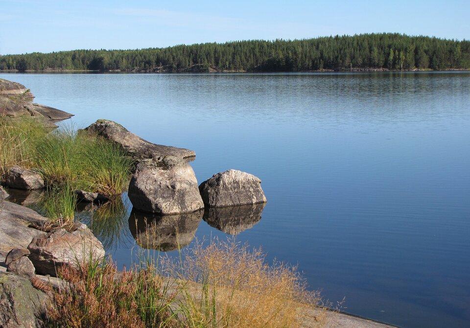 Na zdjęciu jezioro, na pierwszym planie kamienisty brzeg, sitowie. Drugi brzeg jeziora połózony woddali porośnięty lasem iglastym.